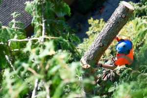 treecare-service