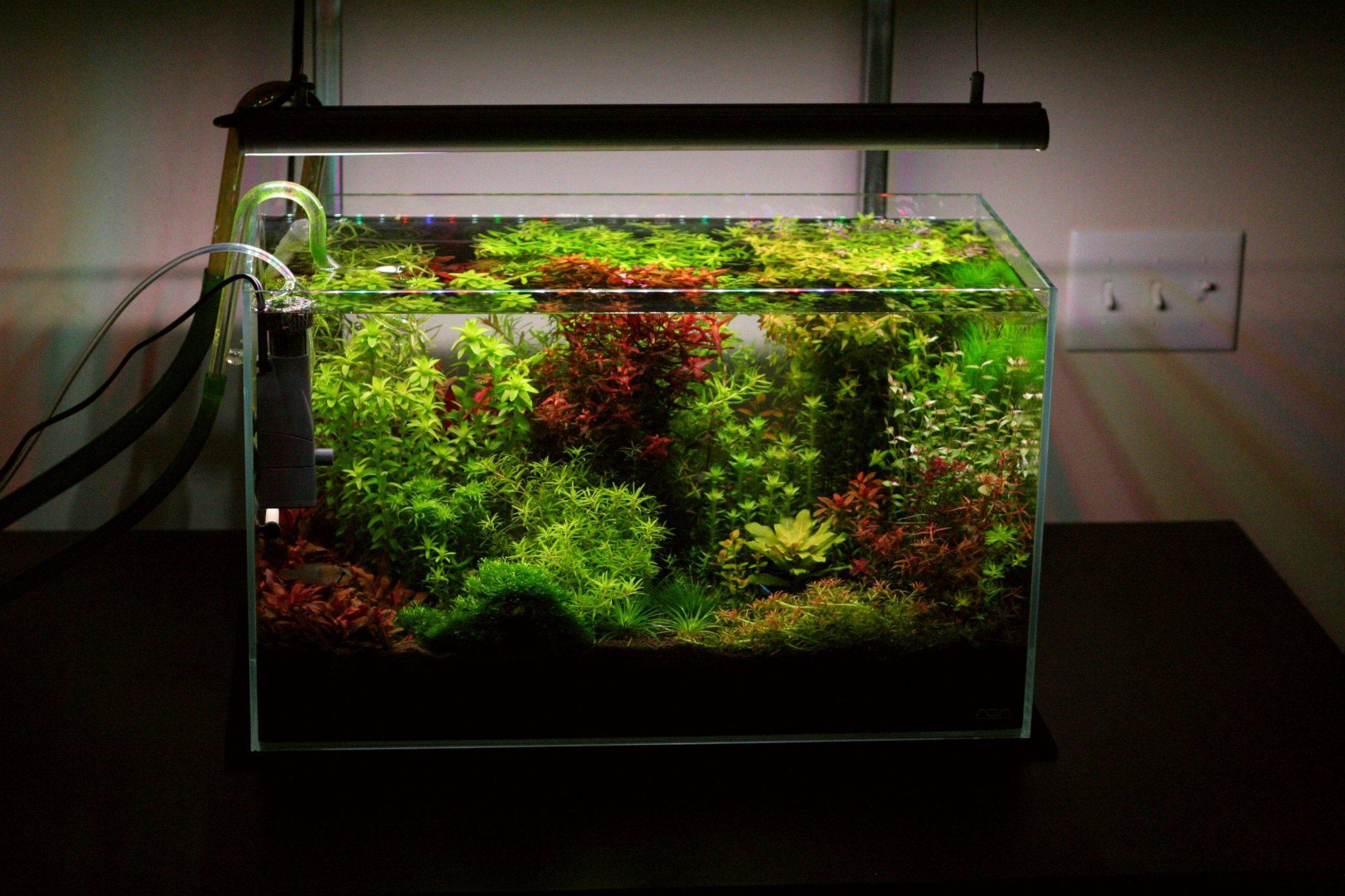 discount fish tanks