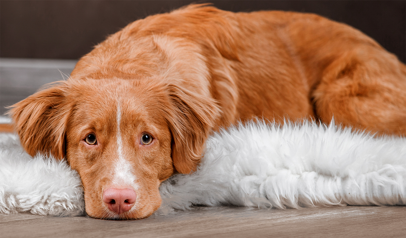 coconut oil for dog constipation
